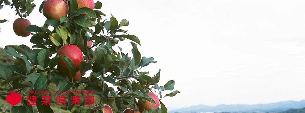 健菜倶楽部:冨士りんご